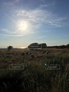 デンマークの島Samsø🇩🇰の写真・画像素材[1225326]