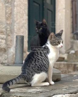 ドゥブロヴニク(クロアチア)の小道にいた2匹の猫の写真・画像素材[4036393]