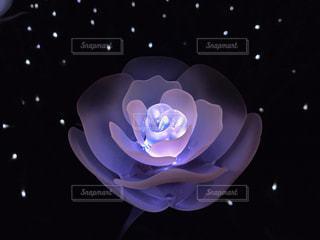 光る花の写真・画像素材[994259]