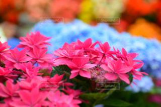 花の写真・画像素材[994022]