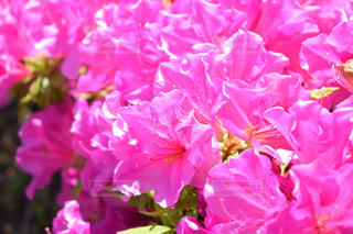 花の写真・画像素材[994028]