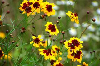 花の写真・画像素材[994029]