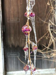 花の氷柱の写真・画像素材[1010246]