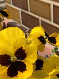 蜜蜂と花の写真・画像素材[1089232]