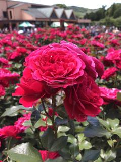 近くの花のアップの写真・画像素材[1199993]