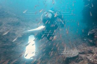 魚のシャワーの写真・画像素材[1220978]