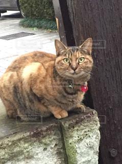 谷中商店街の猫の写真・画像素材[994393]