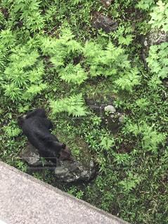 庭に座っている黒い熊の写真・画像素材[995981]