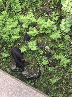野生の熊親子の写真・画像素材[995982]