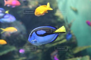 水族館の写真・画像素材[1046077]