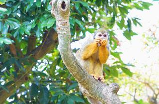 枝に座っている猿の写真・画像素材[2233266]
