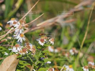花と蜂の写真・画像素材[998348]