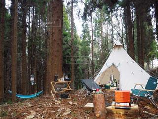 森の中のテントの写真・画像素材[998353]