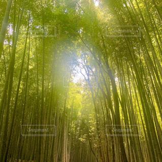 近くの木のアップの写真・画像素材[1405845]