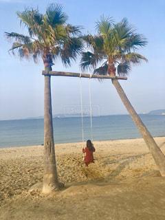 水の体の前にヤシの木がある浜辺の写真・画像素材[2107198]