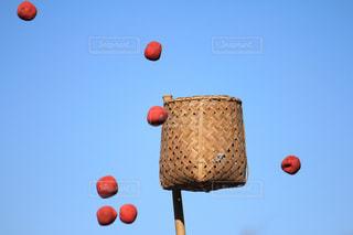 スポーツの写真・画像素材[292630]