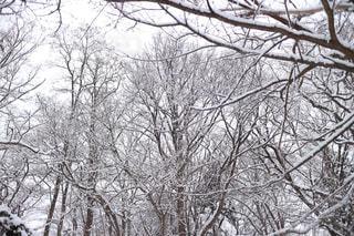 雪景色の写真・画像素材[1007908]