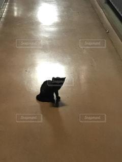廊下の黒い子猫の写真・画像素材[996642]