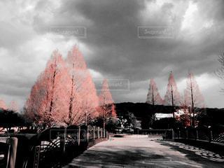 冬の寒い公園の写真・画像素材[999604]