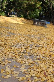 秋の写真・画像素材[998738]