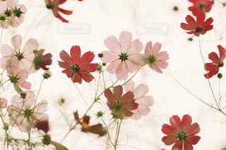 秋模様の写真・画像素材[1000334]