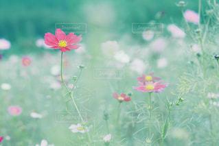 秋のパステルの写真・画像素材[1018337]