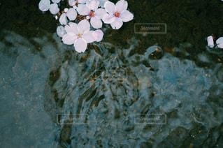 春の川 - No.1022470