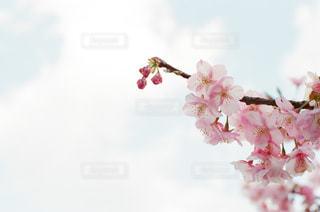 春 - No.1045457