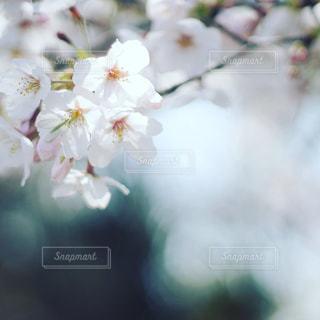花 - No.1096971