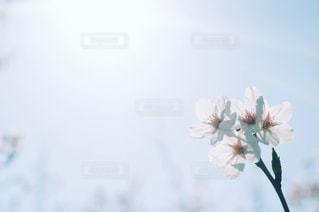 光への写真・画像素材[1096973]