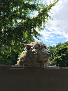 羊さんの写真・画像素材[1004123]