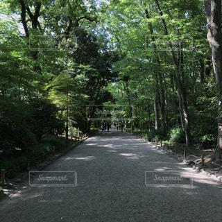 下鴨神社の写真・画像素材[998529]