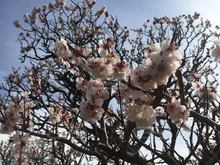 春の写真・画像素材[1074130]