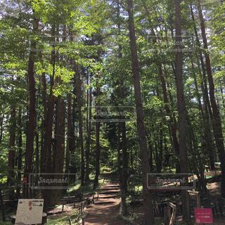 森林の写真・画像素材[535226]