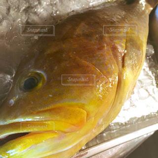 魚の写真・画像素材[535229]
