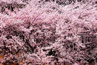 近くの花のアップの写真・画像素材[998841]