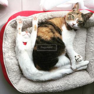 変な寝相の猫の写真・画像素材[999501]