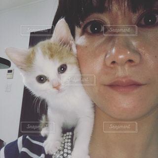 肩乗り子猫の写真・画像素材[1005789]