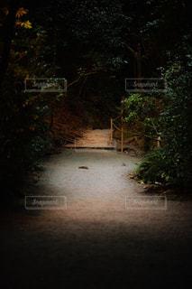 森のビューの写真・画像素材[1001966]