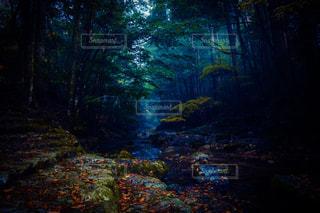 森の中の川の写真・画像素材[1006008]