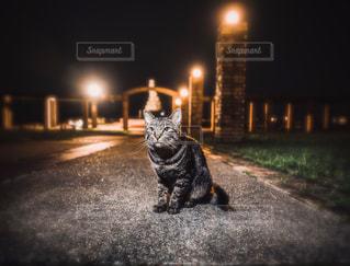 猫の写真・画像素材[2082876]