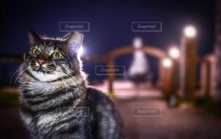 猫の写真・画像素材[2082877]