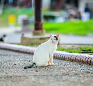 遠くを見つめる猫の写真・画像素材[2083024]