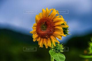 花のクローズアップの写真・画像素材[2282598]