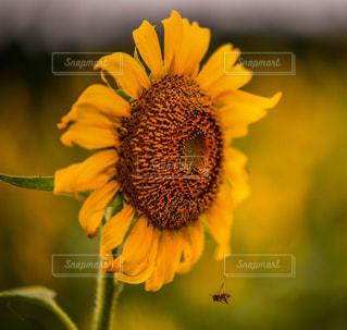 花のクローズアップの写真・画像素材[2282600]