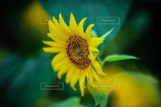花のクローズアップの写真・画像素材[2282601]