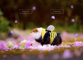 小動物の全身ショットの写真・画像素材[3902840]
