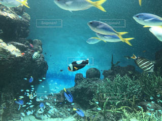 水族館の写真・画像素材[1281137]