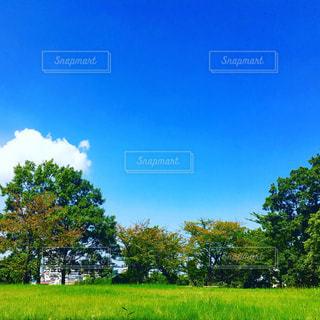 ある晴れた日の青空の写真・画像素材[1001390]