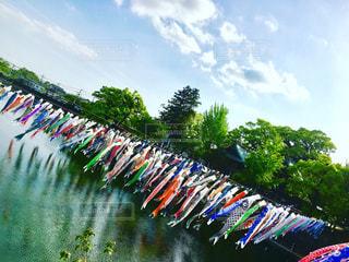 鯉のぼりの大群の写真・画像素材[1002561]